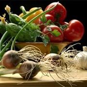 Выращивание овощных культур фото