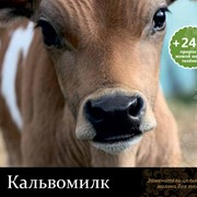 Заменитель цельного молока для телят Кальвомилк