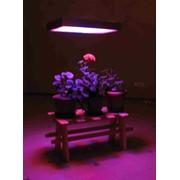 Светильник для растений SNeppi elite bio 350/48/220/В15 фото