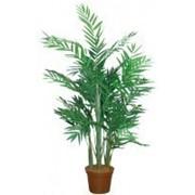 Искусственное дерево Арека Пилар (Код товара: 49724) фото