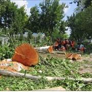 Спиливание и корчевание деревьев фото