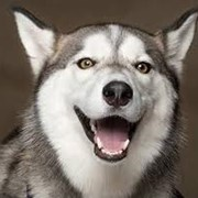 Удаление зубного камня у животных ультразвуком фото