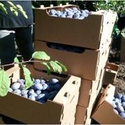 Коробка для овощей 40х30х18 фото