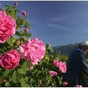 Цветочная вода розы фото