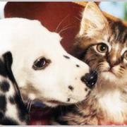 Услуги ритуальные для животных фото