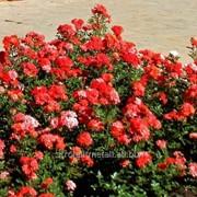 Устройство цветников и клумб №14 фото