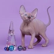 Заказ на котят фото