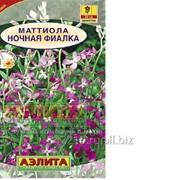 Семена ночная фиалка цветок