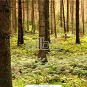 Удаление сложных деревьев фото