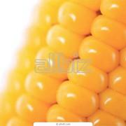 фото предложения ID 2701295