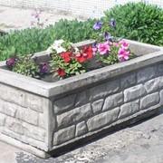 Цветочник садовый фото