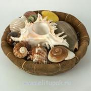 Декор Ракушки фото