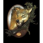 Голова волка на медальоне фото