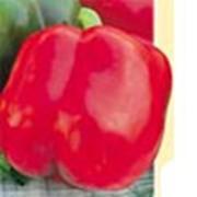 Перец сладкий «Калифорнийское чудо» фото