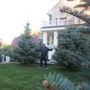 Озеленение сада, дачного участка, обслуживание в Казахстане фото