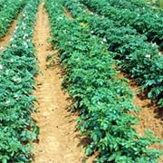 Комплексное удобрение «Бионекс-супер» под овощные культуры