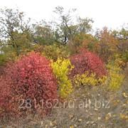 Отдых осенью фото