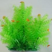 Растение для аквариума фото