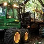 Услуги лесозаготовки (комплексом) фото