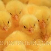 Инкубационное яйцо ц/б фото