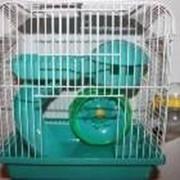 Клетка для хомяков, размер 23*17*h24,5см фото