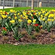 Устройство цветников и клумб №26 фото