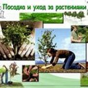 Консультации специалиста по посадке и уходу за растениями фото