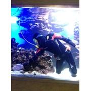 Обслуживание аквариумов/чистка аквариумов в алматы фото