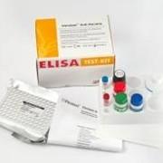Тест-система иммуноферментного анализа Vitrotest фото