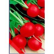Пакетированные семена овощных культур фото