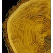 Куплю лес (сосна) фото