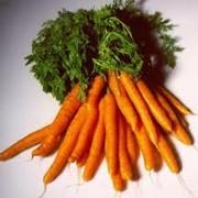 Морковь продажа, опт фото