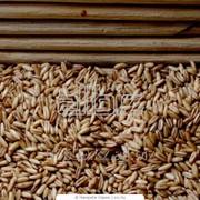 Экспорт зерновых фото