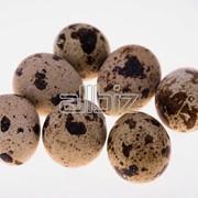 Яйца перепелиные пищевые фото