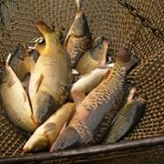 Любительская рыболовля Райгородское водохранилище, Луганская область фото