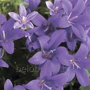 Фотообои артикул FL-0105 фото