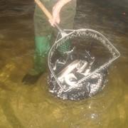 Рыба осетровых пород фото