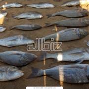 Рыбодобыча фото