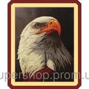 Набор для вышивки картины Гордый Орел 73х58см 373-37010702 фото