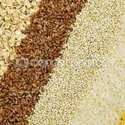 Выращивание и продажа зерна фото