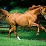 Лошади казахские, Лошади фото