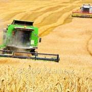 Зерновые культуры от 500тн фото