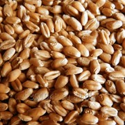 Пшеница 3, 4 класс