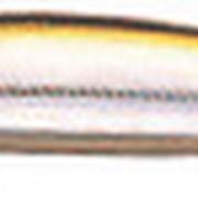 Воблер Daiwa TD Minnow 1061SP