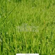 Посев газона фото