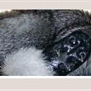 Пошив, ремонт, реставрация изделий из меха фото