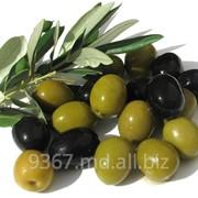 Зеленые оливки Kassel, Греция фото