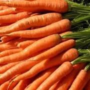 Морковь. Выращивание и реализация. фото