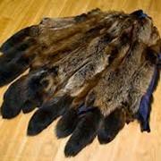 Натуральный мех енота фото