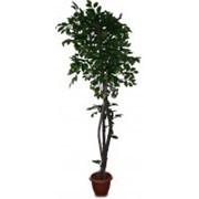 Искусственное дерево Фикус бенджамин латекс (Код товара: 69613) фото